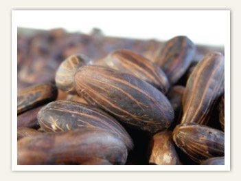 Fijiana Cacao beans