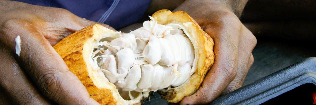 Cocoa Pod - Fijiana Cacao Chocolate Company