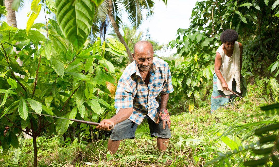 Fiji Cacao Farmers